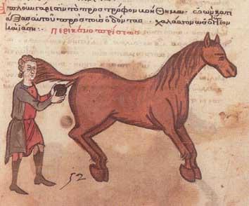 pferde hoden